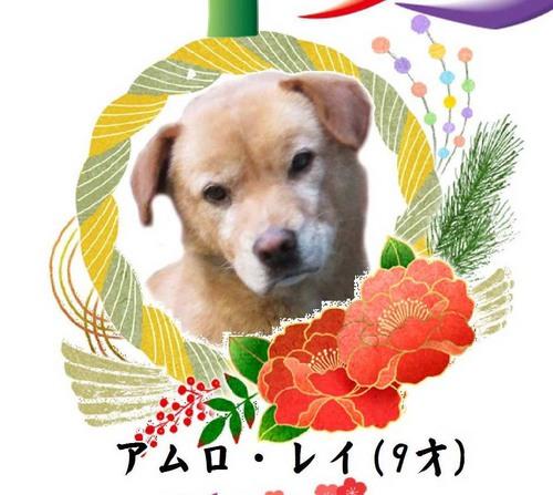 平成30年賀精工堂レイ.jpg